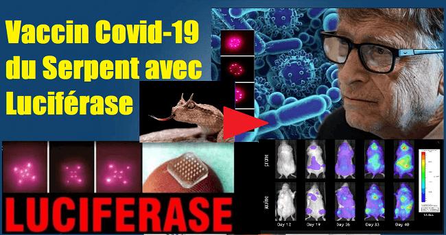 Vaccin_Covid_19_Serpent_Luciferase_2_1